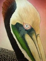 Pelican Peeking by scott-plaster