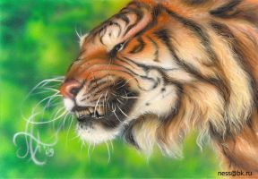 Tiger summer by Airness83
