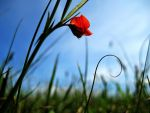 Nature In Red by Fosforonero