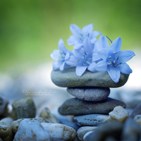Zen Flowers. by OliviaMichalski