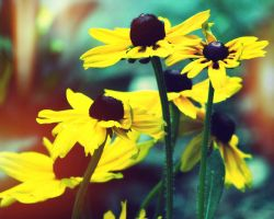 Be like the flower, turn your faces to the sun. by ahley