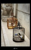 Bird Cages by WSmieszek