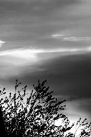 Twilight And Tree-bw 212 by lichtie