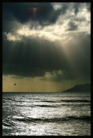 lone bird before the storm by Buddhalassie