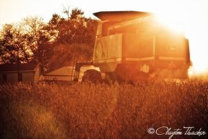 Harvest Sunset 14 by cthacker