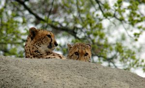 Mother and Son by goor