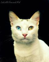 Heterochromic Ghost. by Catist