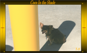 Coco finding some shade! by Taures-15
