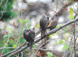 MouseBirds after first rain by NagWolf