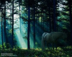 Forest of Light by Ariel-Bubbles