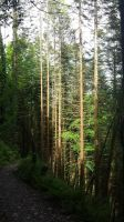 Woods 14 by Fishbaker