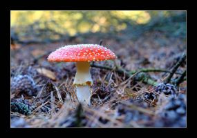 fly agaric 3 by 21711
