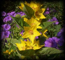 The Yellow Ones by aquifer