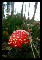Toadstool by Perclissigi