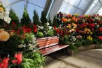 Seat Among the Begonia Stock by blaisedrew62