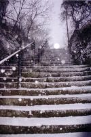snowy steps by tunny