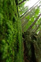 Moss_3 by kulfoniasty