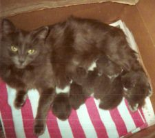 Minette and Family by Cellas