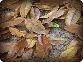 let the leaves fall by x--photographygirl