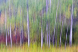 Painted Poplars DT18077 by detphoto