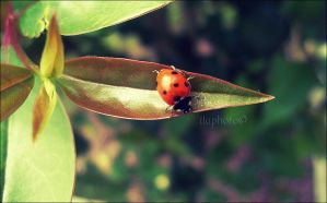 First ladybug by Lilith1995