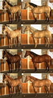 Mare Auctions! by banditandshastagal