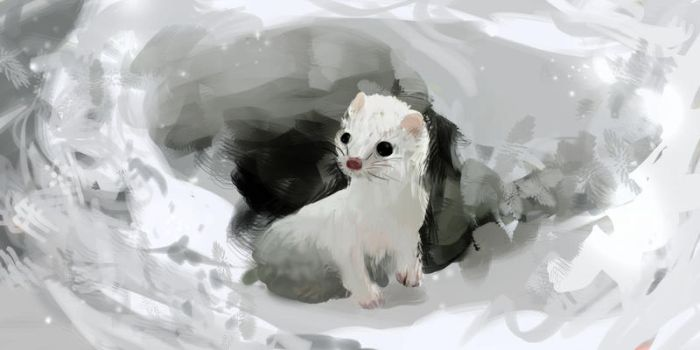 White Ferret by Illu-sab