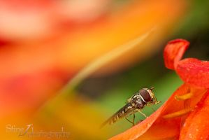 Surrounded by color by StineJ