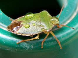BUG-ger I'm all wet... by HannahChapman