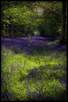 Enchanted Woodland by grimleyfiendish