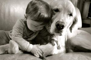 The Sweetness of Dogs by gallindz