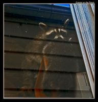 Guests on the Porch by boron