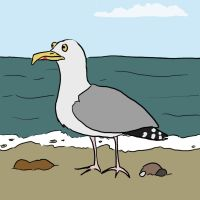 Something has surprised this seagull by femalefred