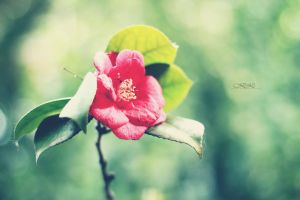 daily flower by kathrinska