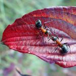 Ants. Blind date. by elivarz