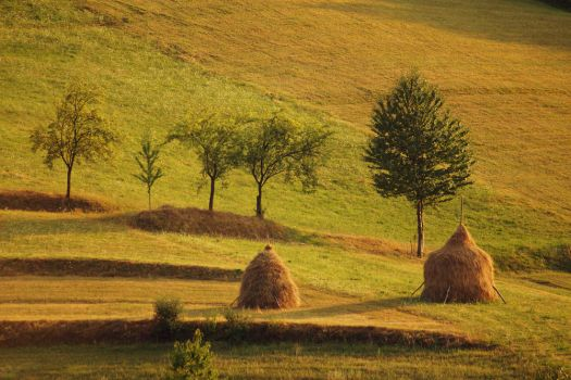 Romanian countryside by Serjia