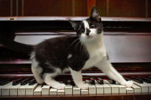 Kitten on piano by FurLined