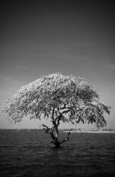Cambodia - Loneliness by lux69aeterna