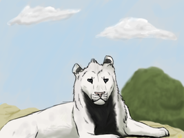 Ataro The White Lion by Bloodshadewolves