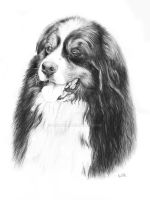 Bernese Mountain Dog by Loukya