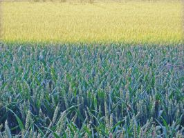 dfferent shades of crop by loobyloukitty