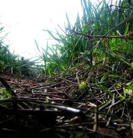 Ground Level Grass 2 by pete-c-89
