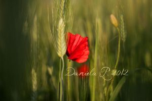 Love Story by davanille