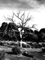 ANSEL TREE SURREAL by CorazondeDios
