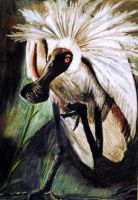 Spoonbill by imodin
