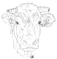 Limousine Cow Face by Kawisaurus