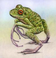 New Caledonian Bipedal Frog, 5 002 015 by WillemSvdMerwe