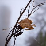 Autumnal Composition With The Water Drops by rici66