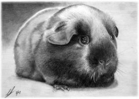 Self Black Cavy by bivoirart