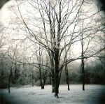 holga winter 1 by rakastajatar